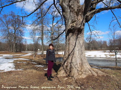 вековые дубы фото