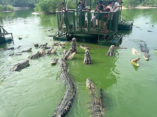 Dangerous crocodile tourist attraction shut down