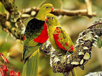 Birds parrot Wallpapers HD/Birds parrot Photos/ Birds hd Images/Birds hd picture | Latest Colorful Birds  HD desktop wallpapers | Beautiful Birds HD desktop wallpapers | Birds Wallpapers HD | Birds HD Wallpapers, pictures, and photos