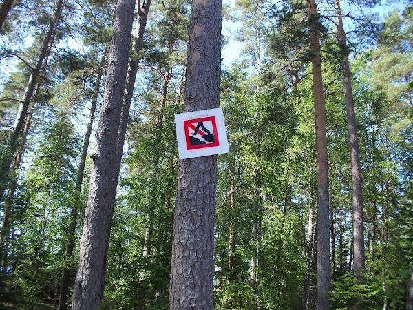 Wald und Feld vor Gericht: Kläger in eigener Sache