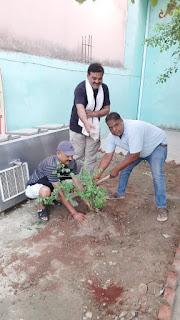 टटीरी में समाजसेवी लोगों ने रोपे पौधे  | #NayaSaberaNetwork