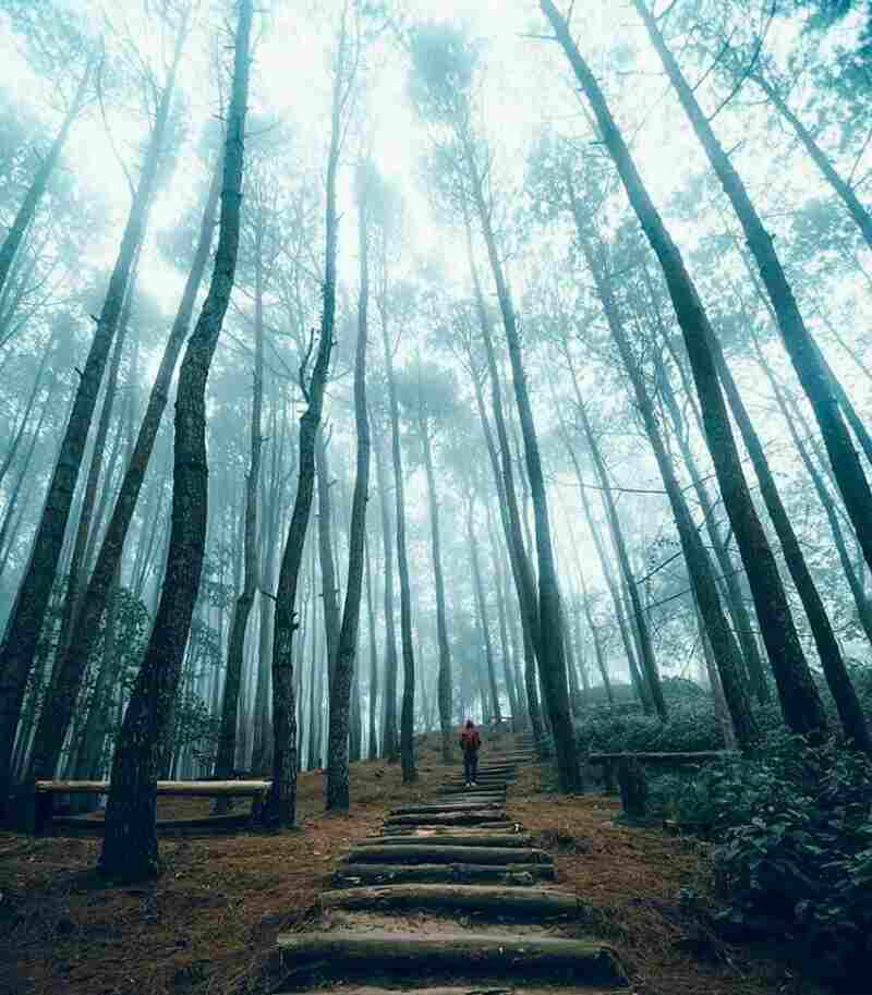 tempat wisata di jogja instagramable Keindahan Hutan Pinus Pengger Yang Instagramable Di Bantul