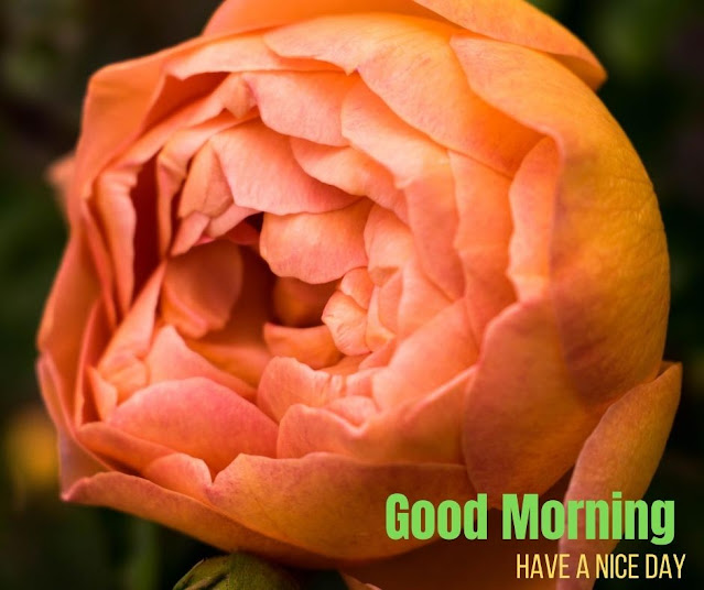 images of flowers with good morning