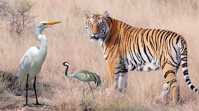 The story of the tiger and crane  another moral story for kids