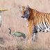 The story of the tiger and crane : another moral story for kids