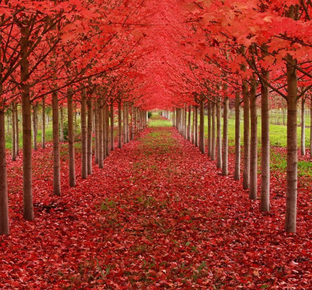 Caminhar neste caminho tem que ser realmente incrível