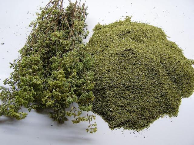Ρίγανη: Το ταπεινό και μυρωδάτο φυτό