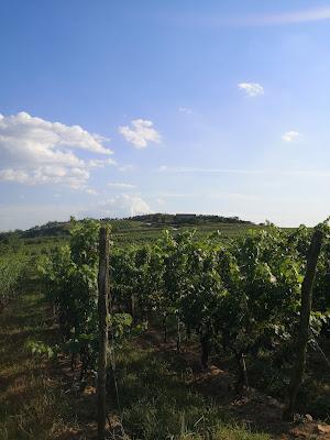 produzione vino cina