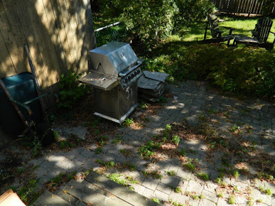 Toronto gardening services Bracondale Hill back yard cleanup before Paul Jung