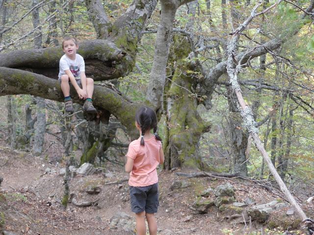 Niños subidos a un árbol en un bosque con musgo