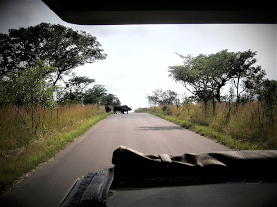 South Africa, Kruger National Park, rhinos, Open Safari Vehicle