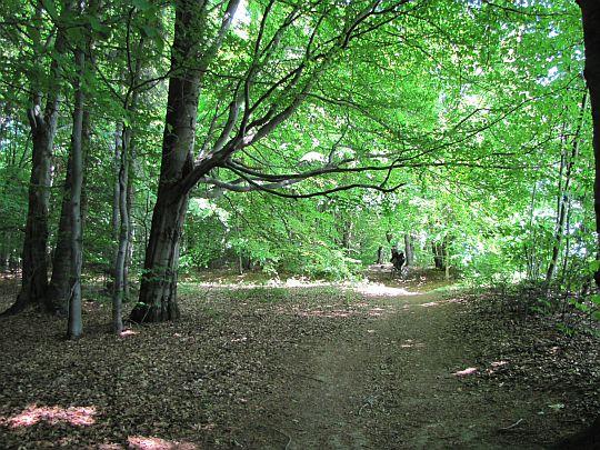 Cały czas ścieżka biegnie obrzeżem lasu.