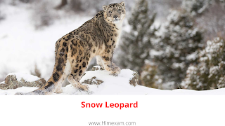 State Animal :Snow Leopard