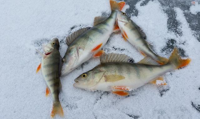 Cara Memilih Bahan Baku Olahan berbasis Ikan