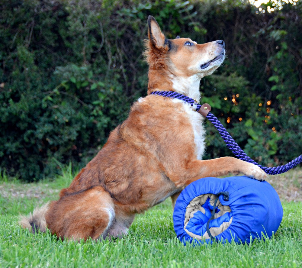 The Dog Geek: Product Review: Canine Hardware Travel Bed