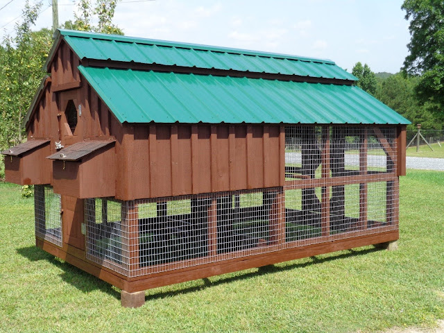 Top 10 Things to Consider Before Buying or Building a Coop