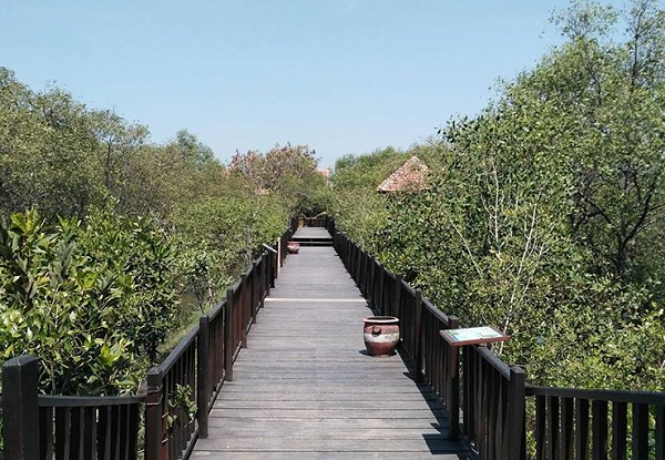 tempat wisata di Surabaya Ekowisata Mangrove Wonorejo