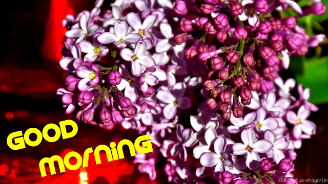Good morning image flowers