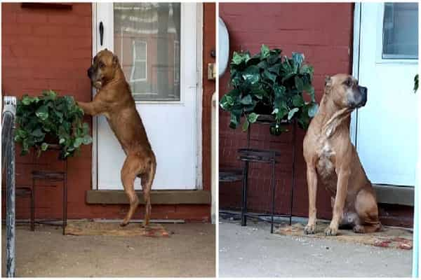 Deserted Pet Dog Waits On Porch For Weeks Unaware Family Members Moved Away