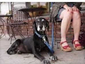 Pet охорони здоров'я проблеми профілактики та виявлення-ключі до ваших домашніх тварин довголіття