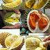 කෙනෙක් අකමැති කෙනෙක් කැමති  ගුණදායක රසවත් පලතුර දූරියන් (Durian)