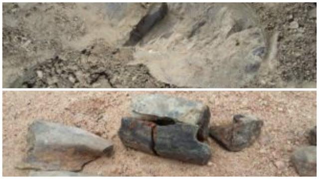 Em Olivença/Al, adolescente encontra fósseis de possível 'dinossauro'