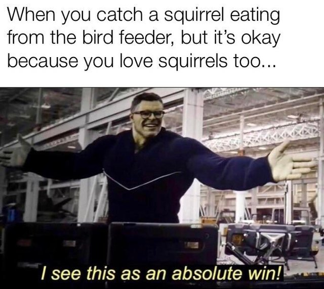 I like animals a lot