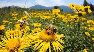 Arı Sütü ile ilgili aramalar arı sütü fiyatı  arı sütü nedir  arı sütünün faydaları saraçoğlundan  arı sütü nerede bulunur  arı sütü ekşi  arı sütü nereden alınır  arı sütü faydaları ibrahim saraçoğlu  arı sütü nasıl olur