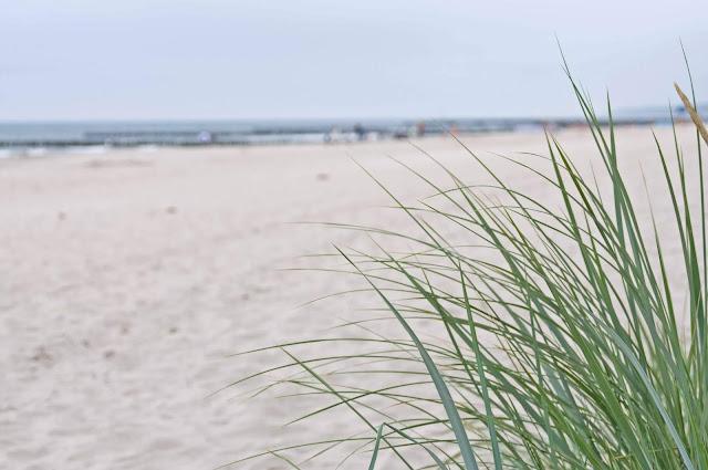 trawa na plaży, Niechorze, plaża, mewy, Bałtyk