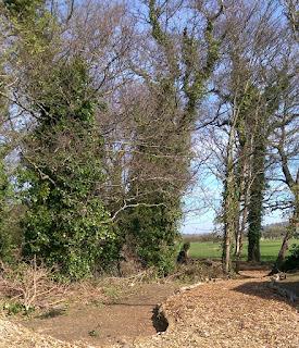 Willow wetland walk winding woodchip path