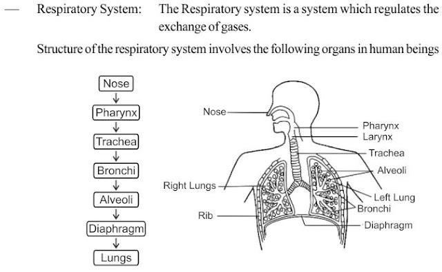 NCERT Notes for Fundamentals of Anatomy and Physiology ...
