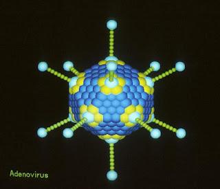 Virus Adenovirus