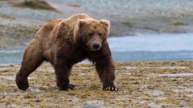 Μυστήριο με άντρα που βρέθηκε μισοπεθαμένος σε φωλιά αρκούδας στη Σιβηρία (pics & vids)