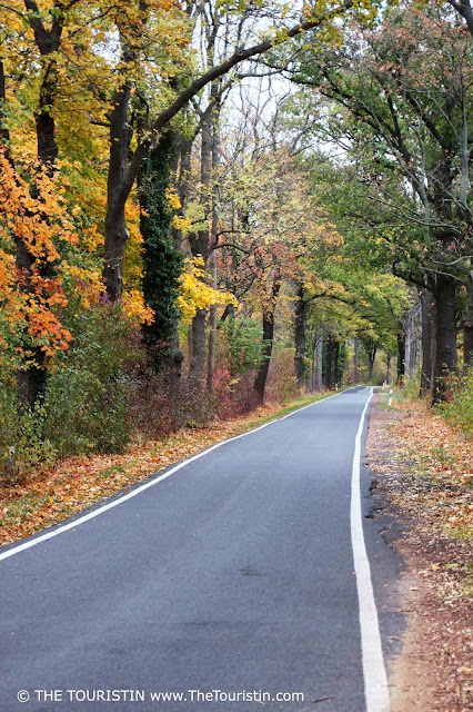 A narrow road lined by trees in fall/autumn foliage.