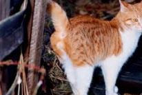 Cats: Tips for stopping spraying
