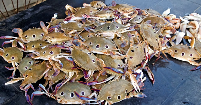 Crabs in Digha