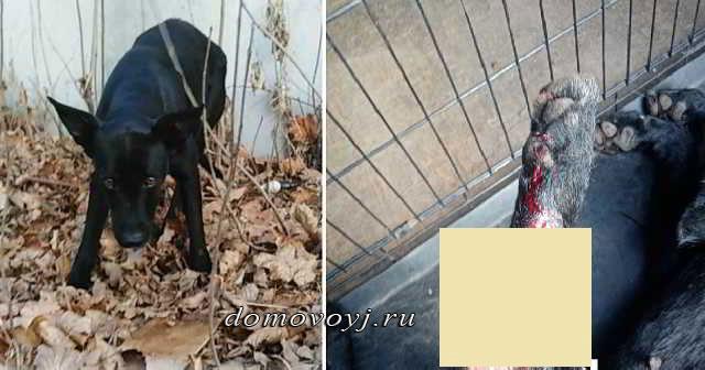 Собачка, которой нанесли раны, 3 дня неподвижно пролежала на холоде у гаража, но никто не оказал ей помощи