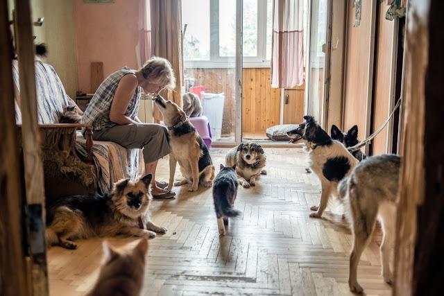 Киянка одна рятує від смерті десятки кішок і собак. Вона потребує допомоги