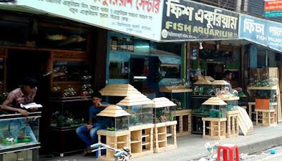 কাটাবন বিড়ালের দাম কাটাবন মার্কেট কাটাবন পাখির দাম কাটাবন পাখির বাজার কাটাবন মাছের দোকান বাংলাদেশে বিড়ালের দাম কাটাবন পাখির দোকান কাটাবন একুরিয়াম katabon market katabon aquarium shop katabon online katabon pet market dhaka katabon cat price katabon dog price in bangladesh katabon pet shop dhaka aquarium katabon কাটাবন মার্কেট।কাটাবন পাখির বাজার ।কাটাবন মাছের দোকান।katabon aquarium shop।katabon market