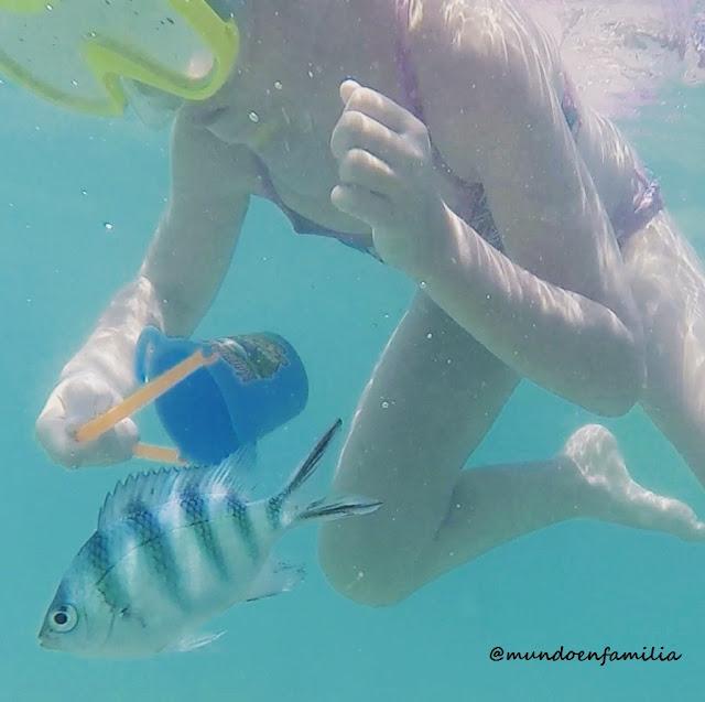 Snorkel en Fish Point