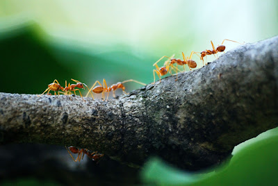 ants swarm, abo saad blog, book review, data analysis, big data, machine learning, artificial intelligence, emotional intelligence