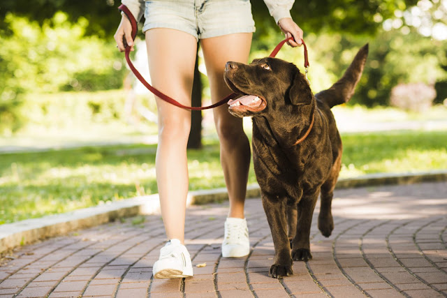 How Often You Should Walk Your Dog?