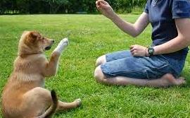 Cara Melatih Anjing Sendiri tanpa Bantuan Pelatih