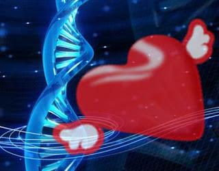Pareri Regenerarea Inimii cu Medicamentul Beta 4 Timosina