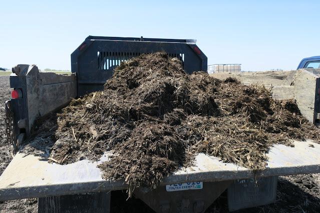 manure nitrogen credit minnesota beef bedding