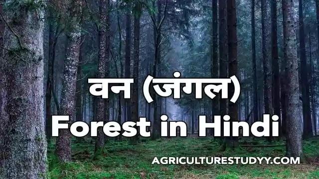 वन (forest in hindi) किसे कहते है, अर्थ एवं परिभाषा, भारत में वनों का वितरण व विस्तार