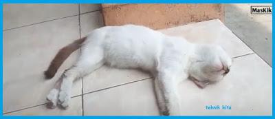 Cara mengobati kucing mencret berdarah cara  alami