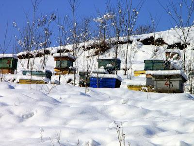 Τι κάνουν οι μέλισσες τον χειμώνα;