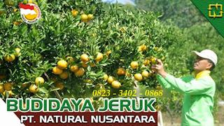 AGEN NASA DI Nurussalam, Aceh Timur - TELF 082334020868