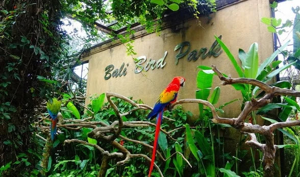 Harga tiket masuk bali bird park